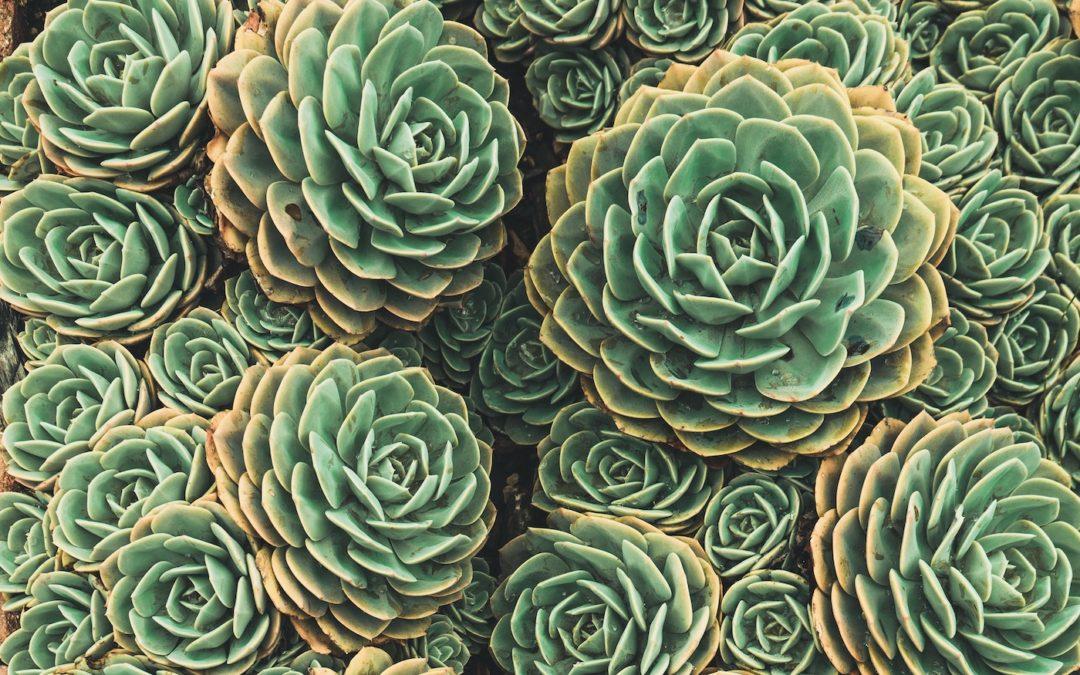 Vaisseaux Merveilleux et nature fractale
