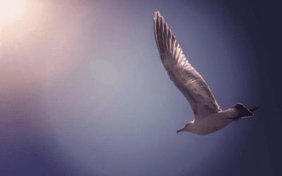 Ode à la liberté: Jonathan Livingston, le goéland