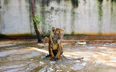 Au parc zoologique